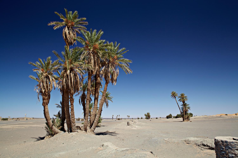 Sahara_2013-040
