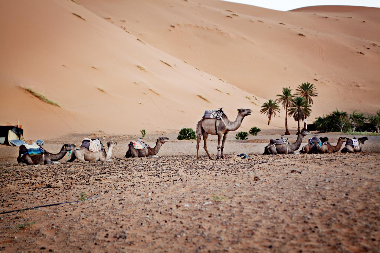 Sahara_2013-094