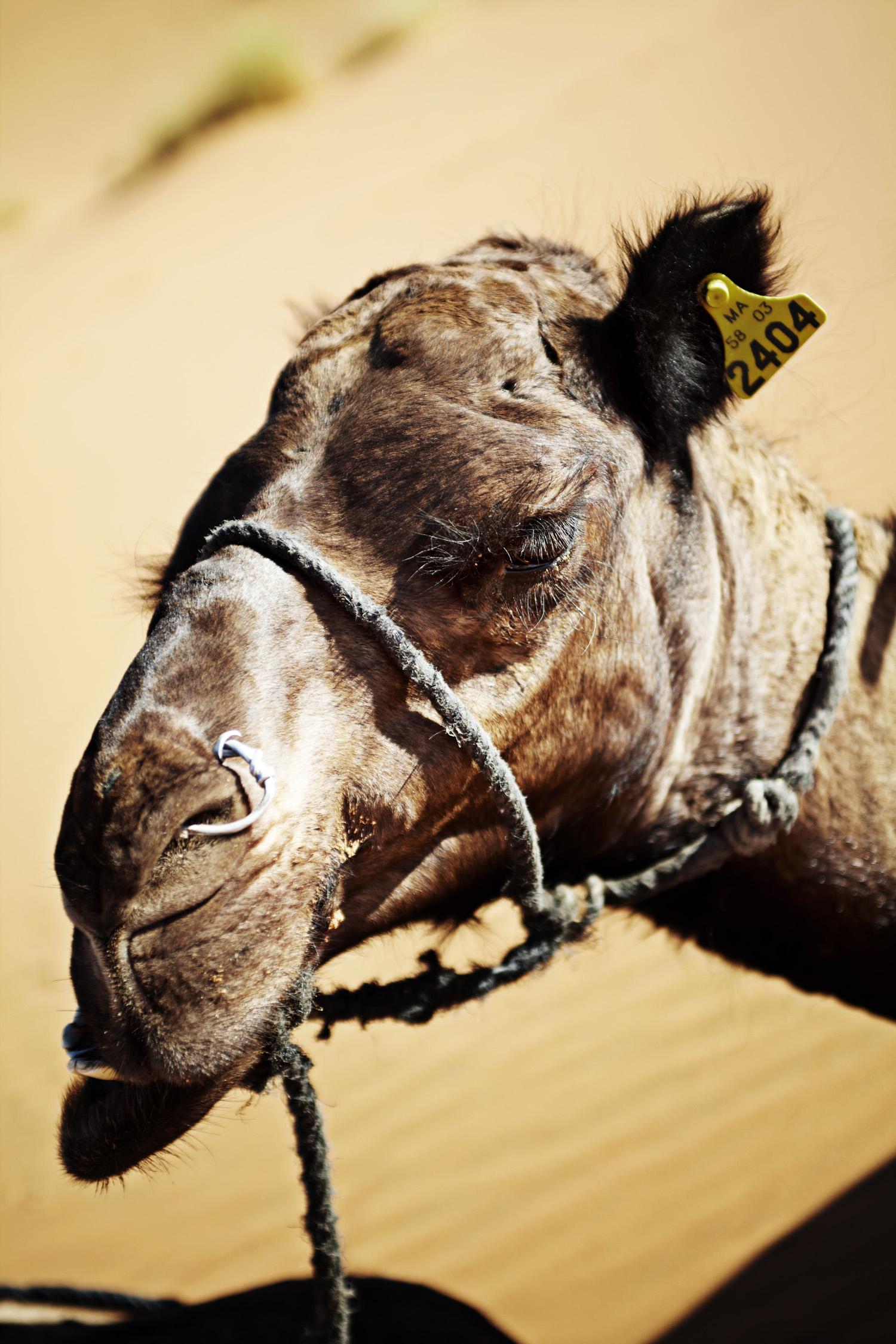 Sahara_2013-188